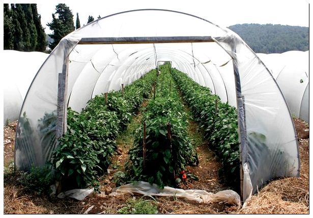 tunnel shaped plastic greenhouse